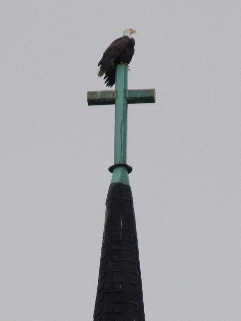 Lincoln Clarkes Photographs: Church bird, Strathcona, Vancouver 2008