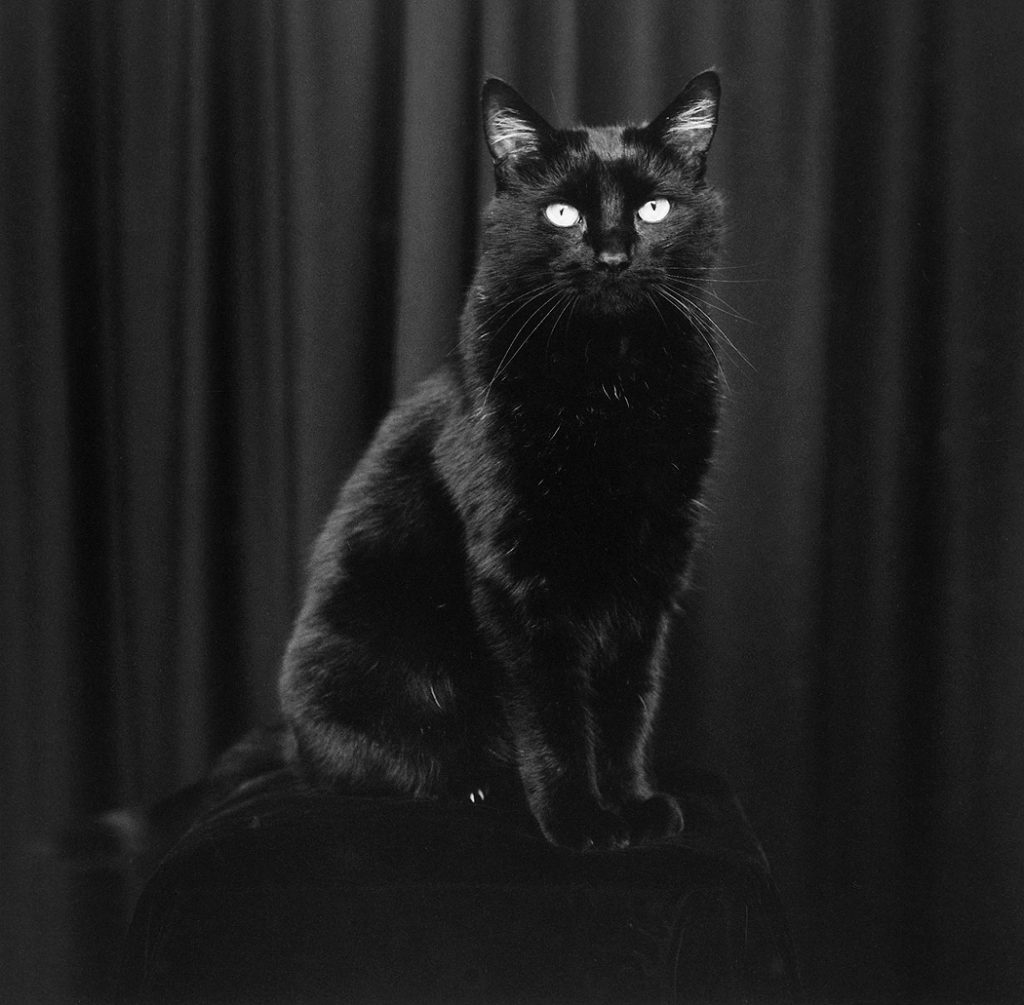 Lincoln Clarkes Photographs: Mr. Kitty, Vancouver 2000