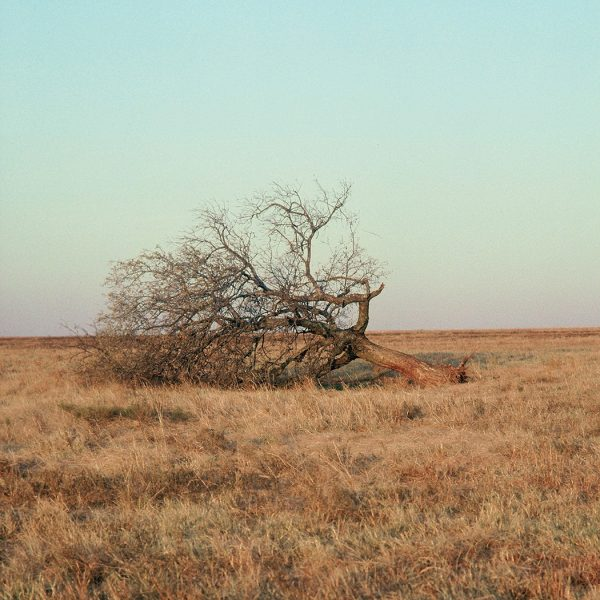 Lincoln Clarkes Photographs: Fallen tree, Paris Texas 1991