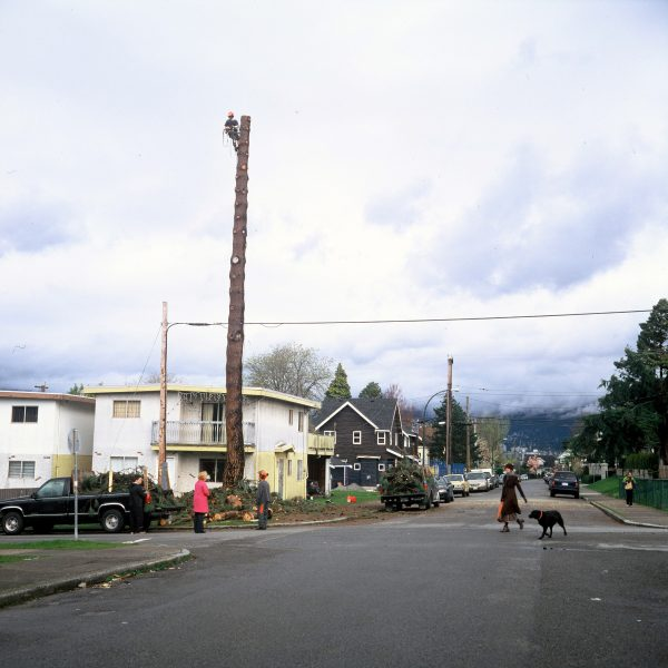 Lincoln Clarkes Photographs: Jeff Wall's tree, Pine On The Corner. Vancouver 2007