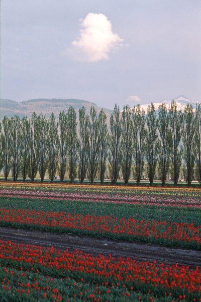 Lincoln Clarkes Photographs: Chilliwack, British Columbia 1991